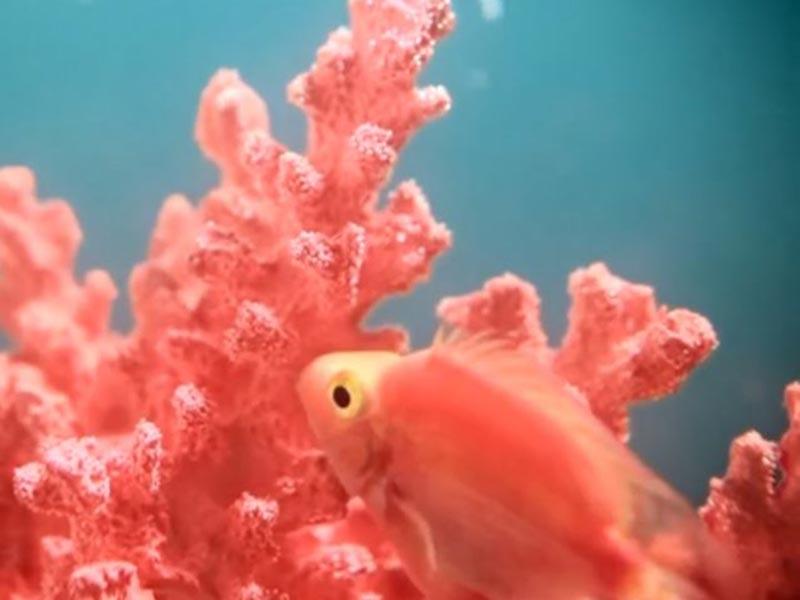 Il colore dell'anno 2019: Living Coral